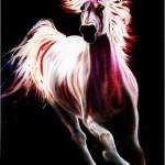 White Arabian - poster